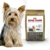 Royal_Canin_Yorkshire_Terrier-500x500